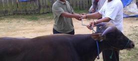 Eid al-Adha sacrificial animal donations